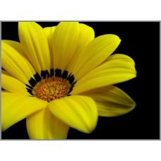 N-101 Картина (Желтый цветок) Алмазная мозаика 27x20см, 17 цветов