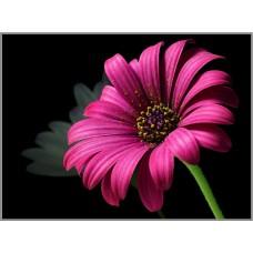 N-102 Картина (Пурпурный цветок) Алмазная мозаика 27x20см, 28 цветов