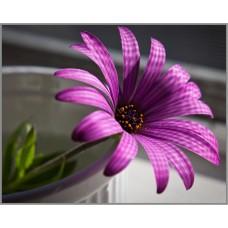 N-103 Картина (Фиолетовый цветок) Алмазная мозаика 25x20см, 31 цвет