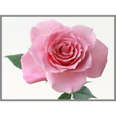 N-114х Картина (Нежная роза) Алмазная мозаика 27x20см, 29 цветов