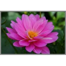 N-116 Картина (Розовый лотос) Алмазная мозаика 29x20см, 30 цветов