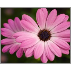 N-119 Картина (Сиреневые нотки) Алмазная мозаика 25x20см, 29 цветов