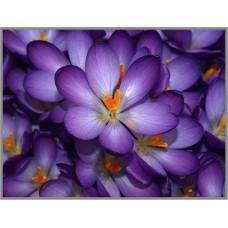 N-121 Картина (Крокусы) Алмазная мозаика 27x20см, 29 цветов