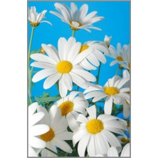 N-174 Картина (Ромашки на голубом) Алмазная мозаика 20x29см, 25 цветов
