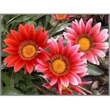 N-175 Картина (Хризантемы) Алмазная мозаика 20x27см, 30 цветов