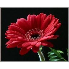 N-308 Картина (Гербера красная) Алмазная мозаика  28x19см, 26 цветов
