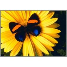 N-344 Картина (Контраст) Алмазная мозаика  28x19см, 24 цвета