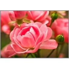 NR-15 Картина (Величие королевы) Алмазная мозаика 29.5x20.5см, 25 цветов
