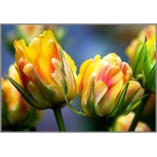 NR-16 Картина (Магия цветов) Алмазная мозаика 29.5x20.5см, 25 цветов