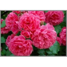 NR-49 Картина (Восхитительные розы) Алмазная мозаика 29.5x20.5см, 25 цветов